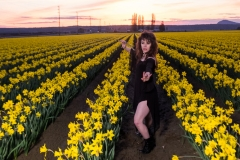 April-Daffodils-Final-Edit-2017-145