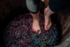 Eagle-Haven-Winery-Crush-2015-Russell-Chandler-Photographer-012
