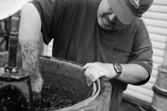 Pressing Pinot Noir grapes at Eagle Haven Winery,