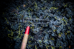 Eagle-Haven-Winery-Production-2014-2015-2016-Russell-Chandler-Photographer-150