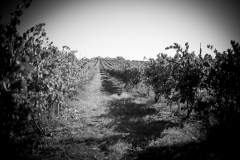 Eagle-Haven-Winery-Production-2014-2015-2016-Russell-Chandler-Photographer-160