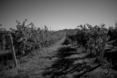 Eagle-Haven-Winery-Production-2014-2015-2016-Russell-Chandler-Photographer-161