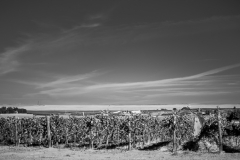 Eagle-Haven-Winery-Production-2014-2015-2016-Russell-Chandler-Photographer-162