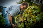 Eagle-Haven-Winery-Vineyard-Harvest-2015-Russell-Chandler-Photographer-011