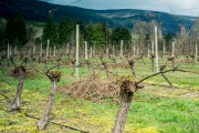 Eagle-Haven-Winery-Vineyard-March-B-2016-Russell-Chandler-Photographer-004