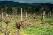Eagle-Haven-Winery-Vineyard-March-B-2016-Russell-Chandler-Photographer-006