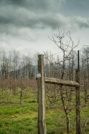 Eagle-Haven-Winery-Vineyard-March-B-2016-Russell-Chandler-Photographer-007