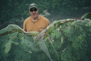 Eagle-Haven-Winery-Vineyard-Netting-August-2015-Russell-Chandler-Photographer-014