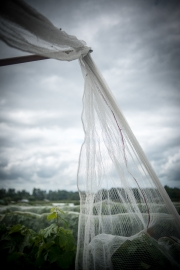 Eagle-Haven-Winery-Vineyard-Netting-August-2015-Russell-Chandler-Photographer-016