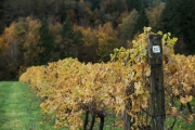 Eagle-Haven-Winery-Vineyard-October-2015-Russell-Chandler-Photographer-014