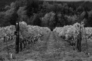 Eagle-Haven-Winery-Vineyard-October-2015-Russell-Chandler-Photographer-015
