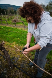 Eagle-Haven-Winery-Vineyard-Pruning-2015-Russell-Chandler-Photographer-013