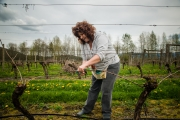 Tina Tying Vines in Vineyard