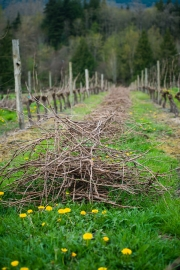 Eagle-Haven-Winery-Vineyard-Pruning-2015-Russell-Chandler-Photographer-021