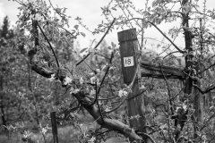 Eagle-Haven-Winery-Vineyard-April-2015-Russell-Chandler-Photographer-004