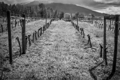 Eagle-Haven-Winery-Vineyard-April-2015-Russell-Chandler-Photographer-008