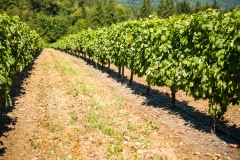 Eagle-Haven-Winery-Vineyard-August-2015-Russell-Chandler-Photographer-001