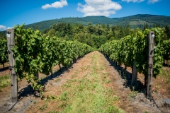 Eagle-Haven-Winery-Vineyard-August-2015-Russell-Chandler-Photographer-003
