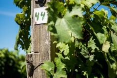 Eagle-Haven-Winery-Vineyard-August-2015-Russell-Chandler-Photographer-004