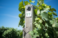 Eagle-Haven-Winery-Vineyard-August-2015-Russell-Chandler-Photographer-005