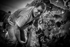 Eagle-Haven-Winery-Vineyard-Harvest-2015-Russell-Chandler-Photographer-010