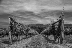 Eagle-Haven-Winery-Vineyard-June-2015-Russell-Chandler-Photographer-001
