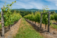 Eagle-Haven-Winery-Vineyard-June-2015-Russell-Chandler-Photographer-003