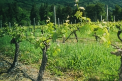 Eagle-Haven-Winery-Vineyard-June-2015-Russell-Chandler-Photographer-004