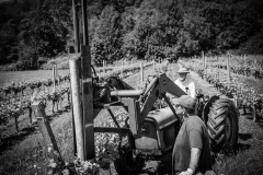 Eagle-Haven-Winery-Vineyard-June-2015-Russell-Chandler-Photographer-005