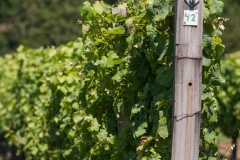 Eagle-Haven-Winery-Vineyard-June-2016-Russell-Chandler-Photographer-005