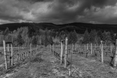 Eagle-Haven-Winery-Vineyard-March-B-2016-Russell-Chandler-Photographer-001