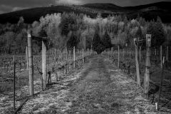 Eagle-Haven-Winery-Vineyard-March-B-2016-Russell-Chandler-Photographer-002