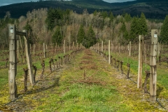 Eagle-Haven-Winery-Vineyard-March-B-2016-Russell-Chandler-Photographer-003