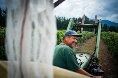 Eagle-Haven-Winery-Vineyard-Netting-August-2015-Russell-Chandler-Photographer-017