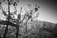 Eagle-Haven-Winery-Vineyard-November-2015-Russell-Chandler-Photographer-001