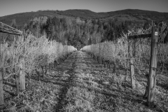 Eagle-Haven-Winery-Vineyard-November-2015-Russell-Chandler-Photographer-004