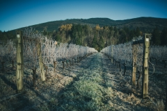 Eagle-Haven-Winery-Vineyard-November-2015-Russell-Chandler-Photographer-005