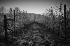 Eagle-Haven-Winery-Vineyard-November-2015-Russell-Chandler-Photographer-007