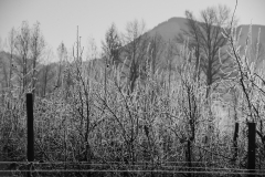 Eagle-Haven-Winery-Vineyard-November-2015-Russell-Chandler-Photographer-009