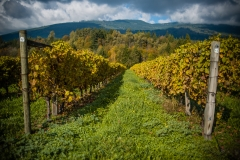 Eagle-Haven-Winery-Vineyard-October-2015-Russell-Chandler-Photographer-001