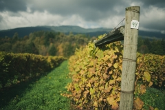 Eagle-Haven-Winery-Vineyard-October-2015-Russell-Chandler-Photographer-002