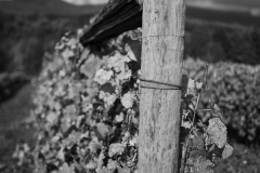 Eagle-Haven-Winery-Vineyard-October-2015-Russell-Chandler-Photographer-003
