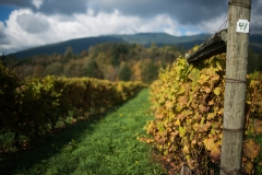 Eagle-Haven-Winery-Vineyard-October-2015-Russell-Chandler-Photographer-004