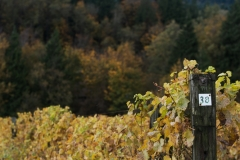 Eagle-Haven-Winery-Vineyard-October-2015-Russell-Chandler-Photographer-013