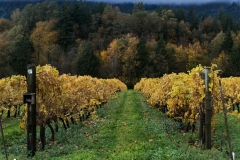 Eagle-Haven-Winery-Vineyard-October-2015-Russell-Chandler-Photographer-016