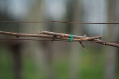 Eagle-Haven-Winery-Vineyard-Pruning-2015-Russell-Chandler-Photographer-003