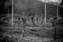 Eagle-Haven-Winery-Vineyard-Pruning-2015-Russell-Chandler-Photographer-007