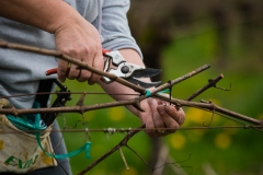 Eagle-Haven-Winery-Vineyard-Pruning-2015-Russell-Chandler-Photographer-011