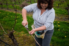 Eagle-Haven-Winery-Vineyard-Pruning-2015-Russell-Chandler-Photographer-012