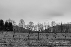 Eagle Haven Winery Vineyard in Winter